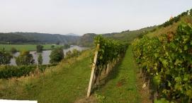 Zernoseky vinice s Labem.jpg